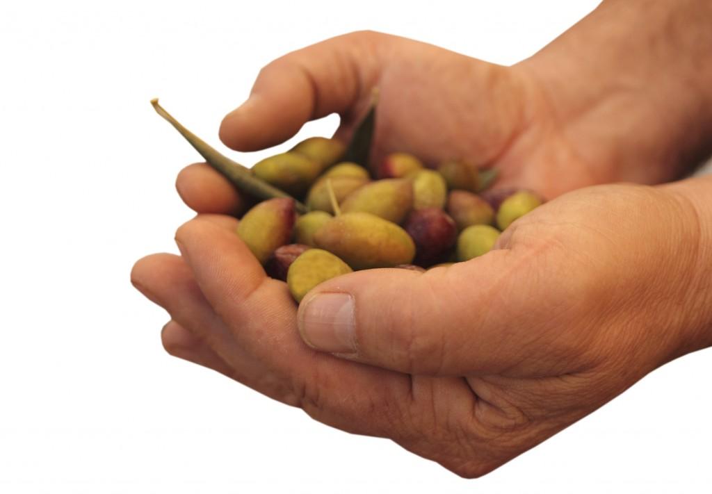 Aceite de oliva virgen extra, AOVE, DOP Priego de Córdoba, oleoterapia